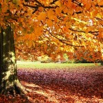autumn-fall-leaves-1